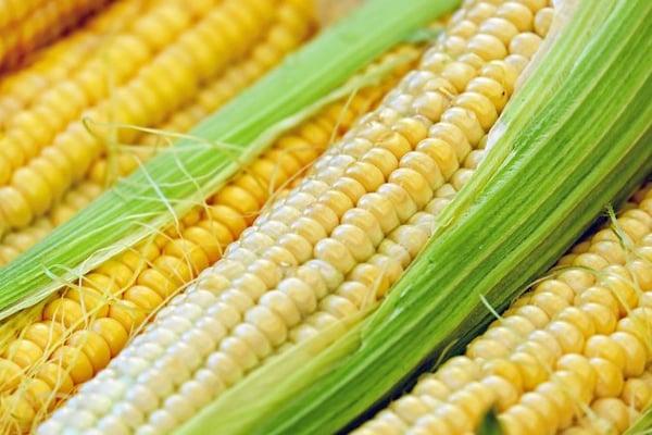corn-1605664_1920-676x451