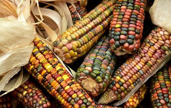 corn-3663086_1920-676x430