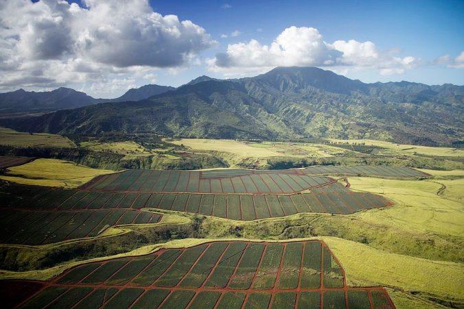 pineapple-fields-996346_1920-676x451