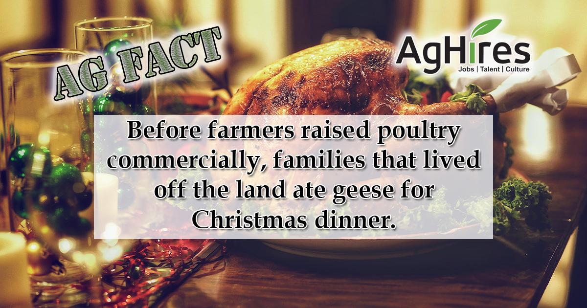 Christmas Food Facts