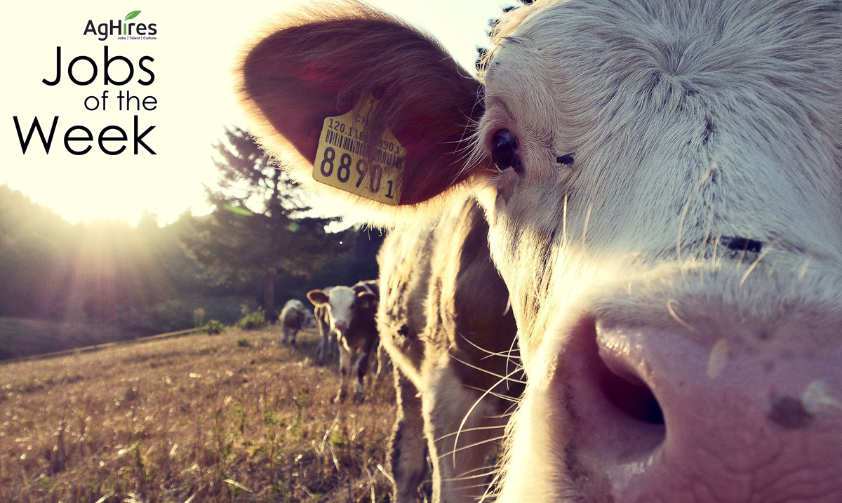 Livestock Jobs