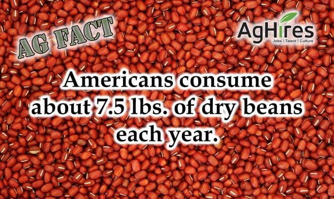 Americans Consume