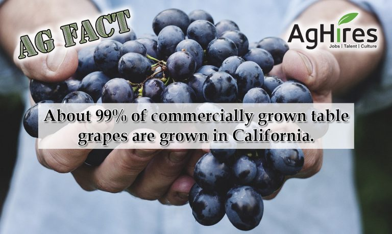 Grapes were cultivated