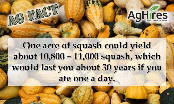 Squash Facts