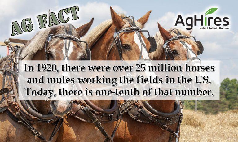 Horse Power on the Farm