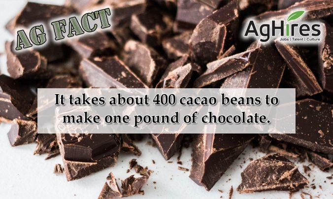 Cacao Beans make
