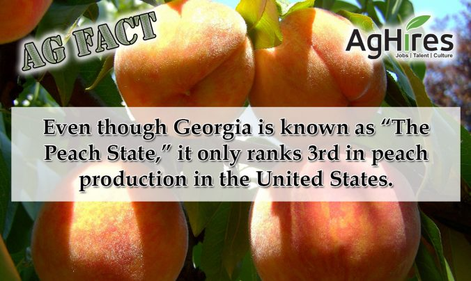 Georgia Ag Facts