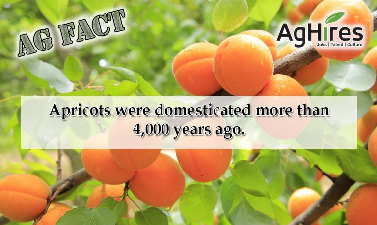 Awesome Apricot