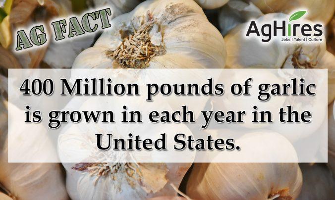Garlic Grown
