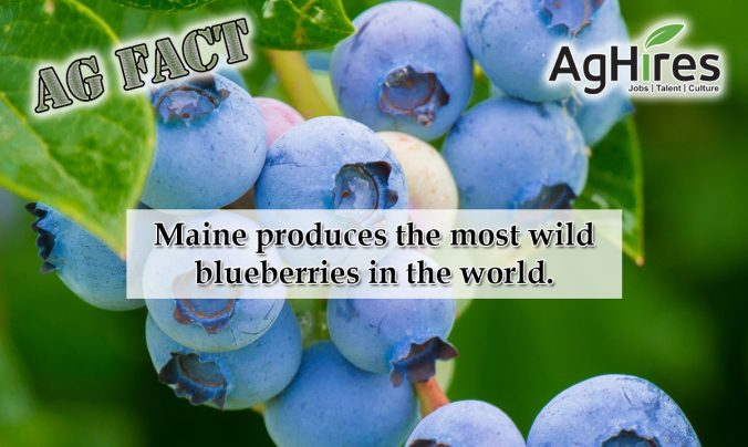 Maine Agriculture Facts