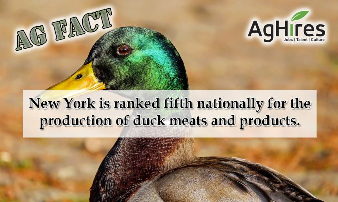 6 Interesting Ag Facts about New York