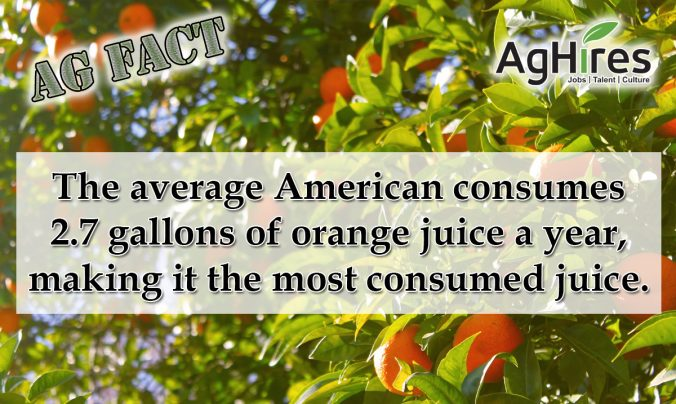 20 Facts About Oranges