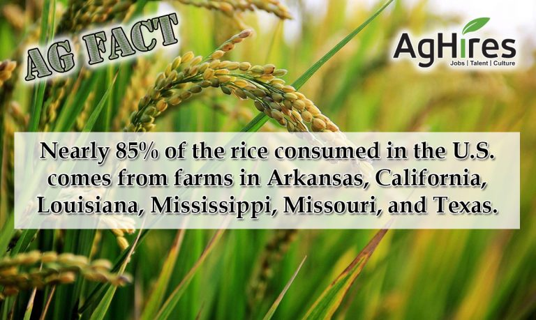 Rice Consumed