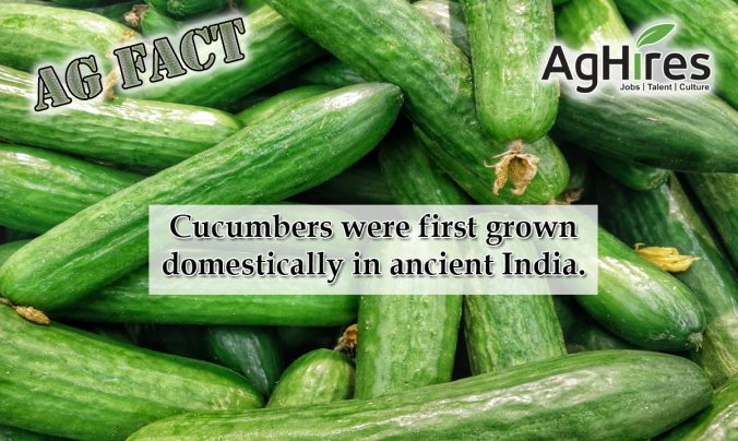 20 Cucumber Facts