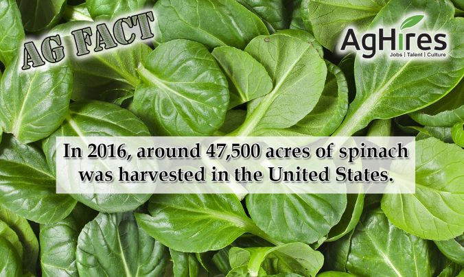 Spinach Facts