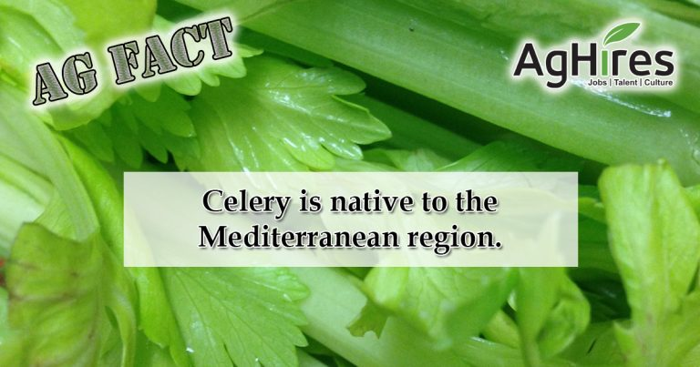 Cool Celery