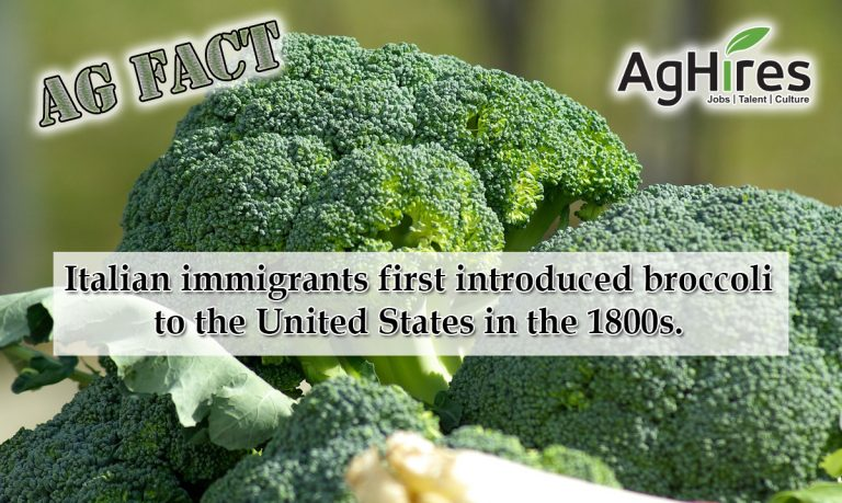Facts about Broccoli
