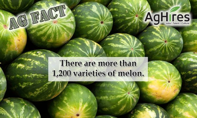 Melon Facts