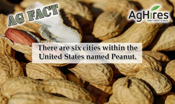14 Nutty Peanut Facts