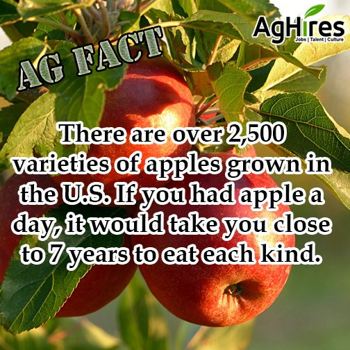 Apples are Grown