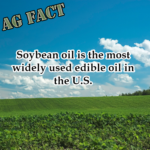 Soybean oil is the most widely