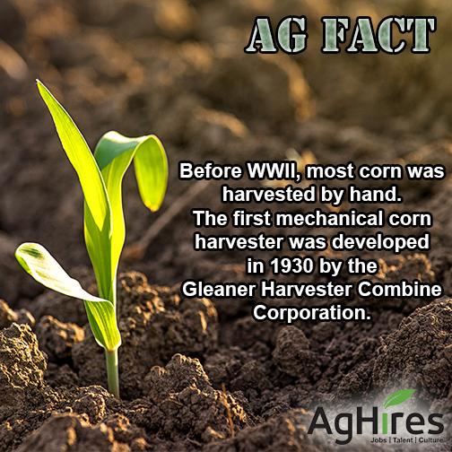 Mechanical Corn Harvester
